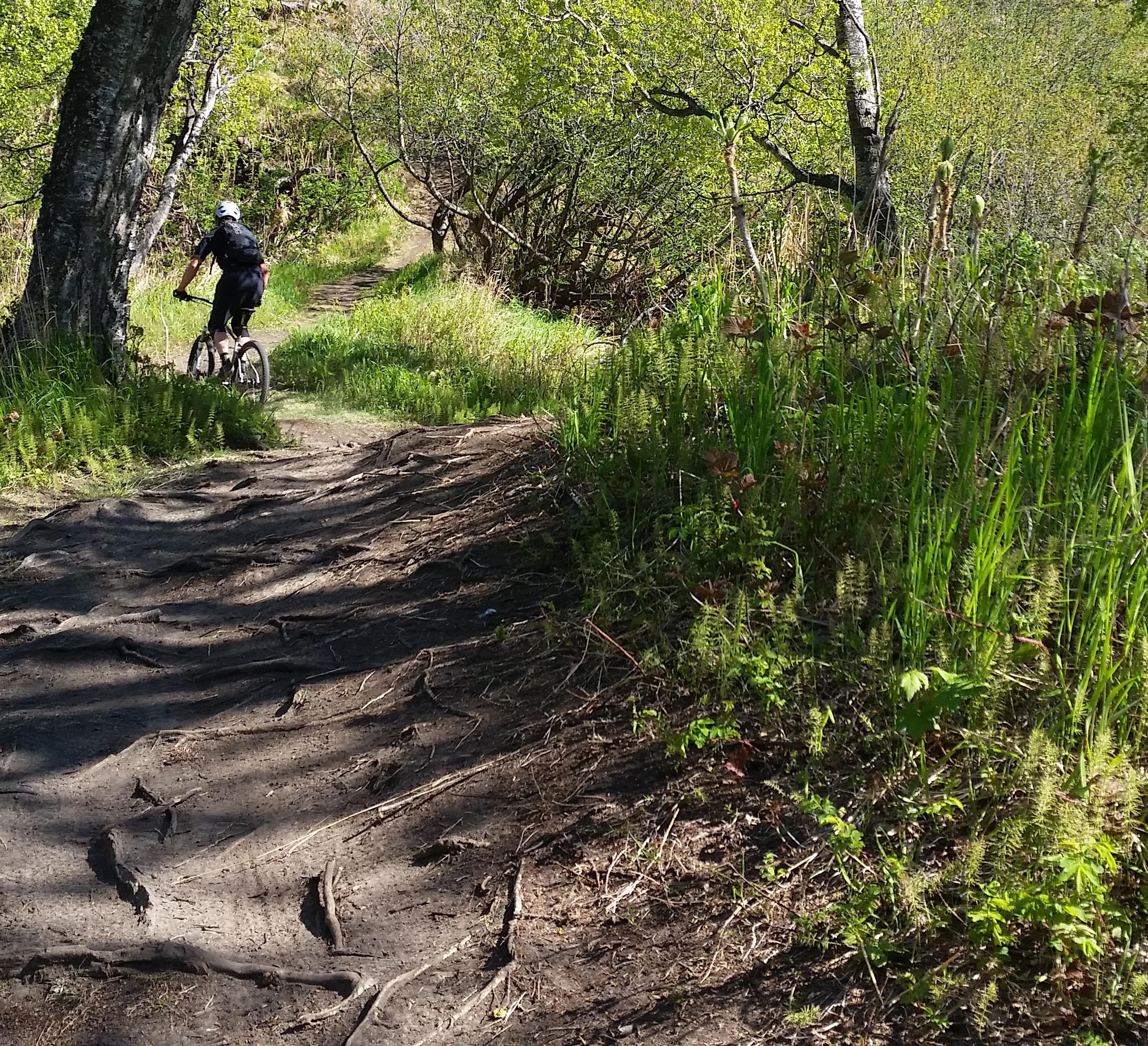 Mountain bike tour in Kincaid Park singletrack trails