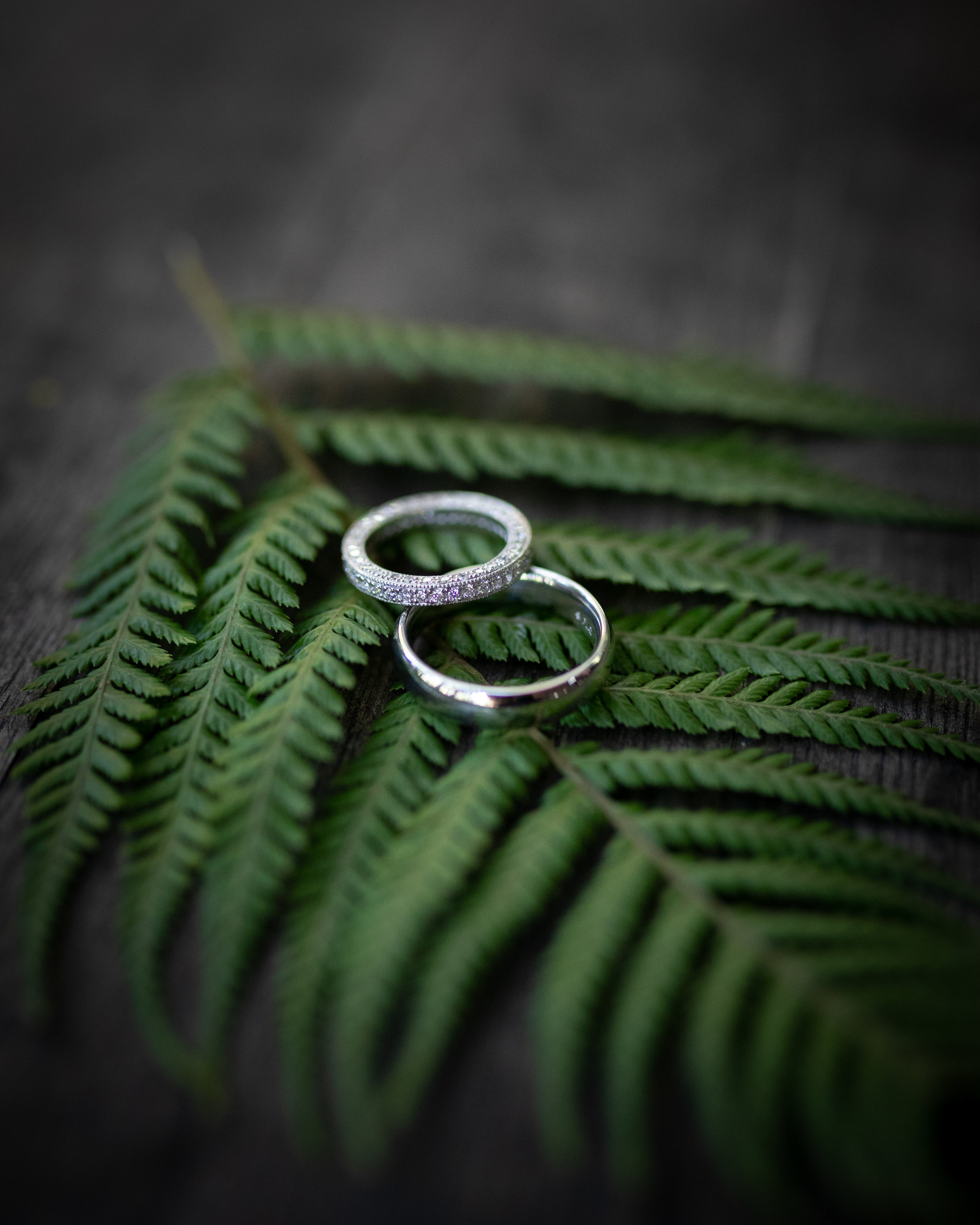wedding-1-41.jpg