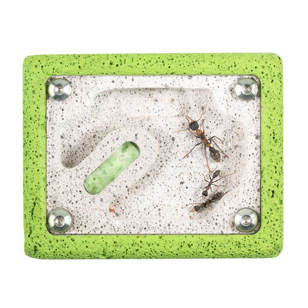 Ants02.jpg