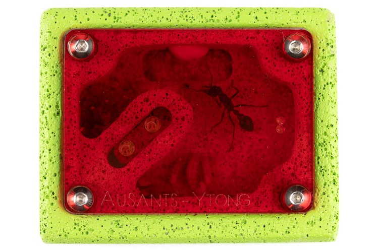 aus-ants-ytong-ant-farm (2).jpg
