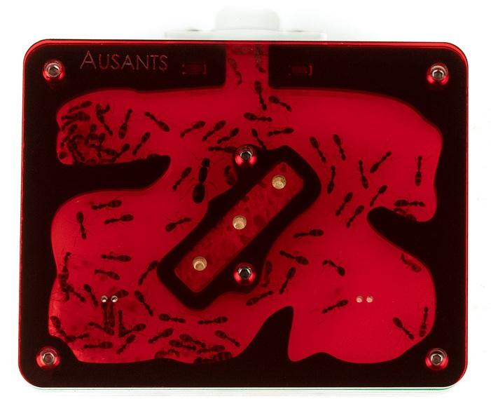 aus-ants-acrylic-ant-farm (2).jpg