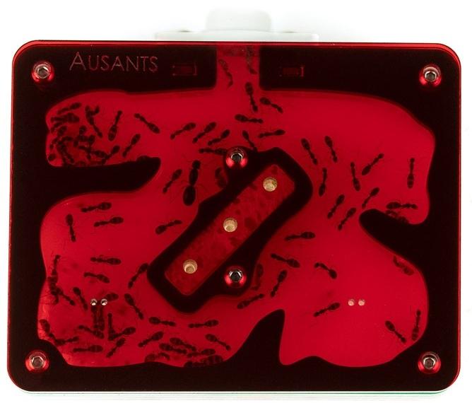 aus-ants-acrylic-ant-farm%2B%25282%2529.jpg