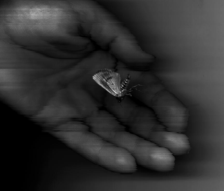 One Moth in Hand... + BandW.jpg