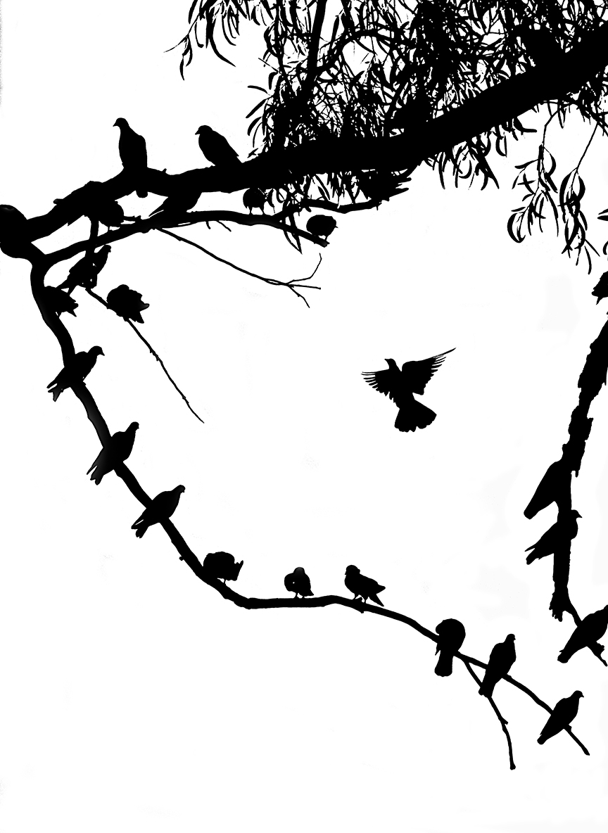 Photo-Freedom Flight.jpg