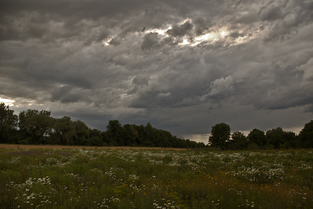 Evening Comes to a Summer Field
