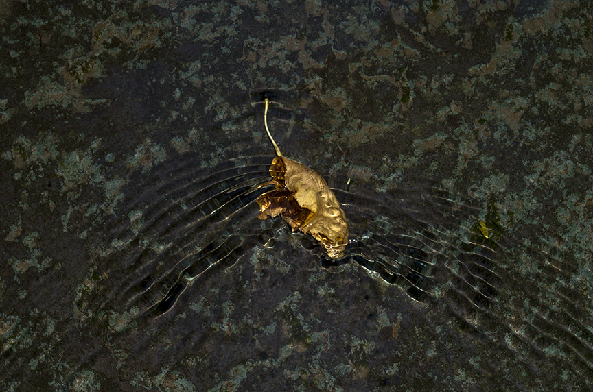 TUR-Gold Leaf +.jpg