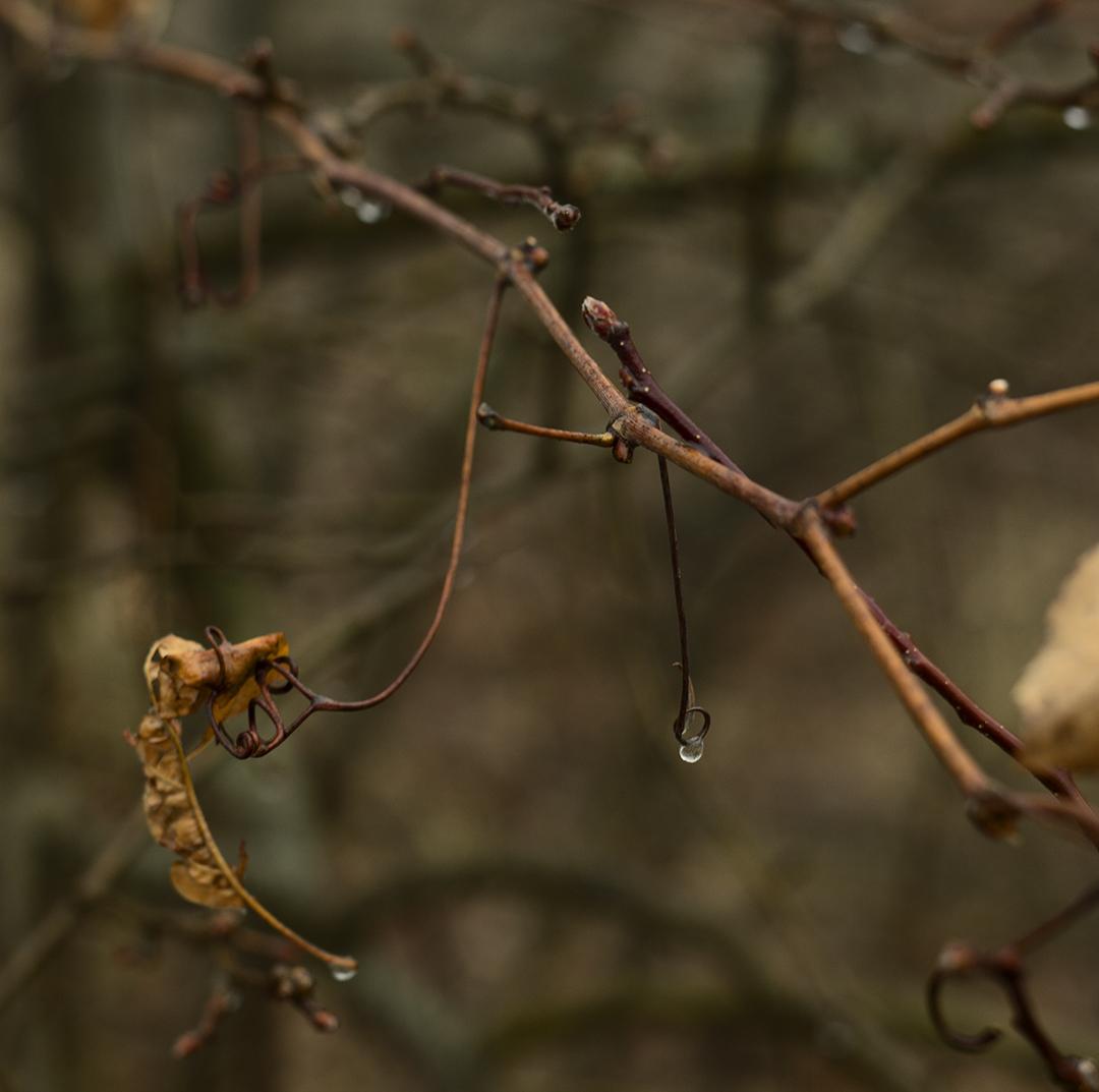Drops of Rain - 4 +.jpg
