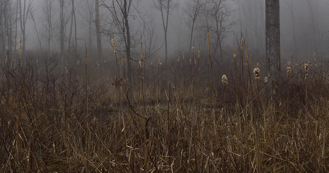 Fog - 7 +.jpg