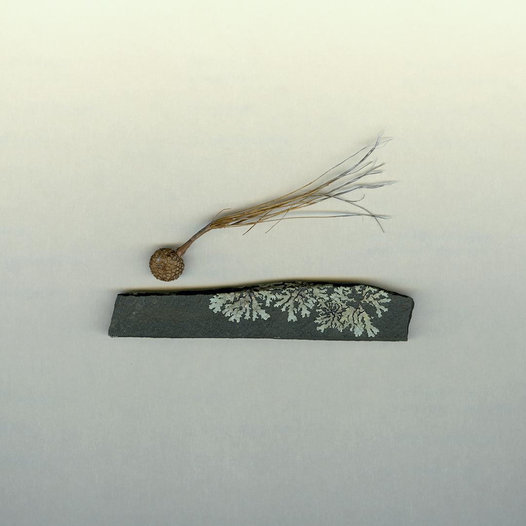 Flying Seed