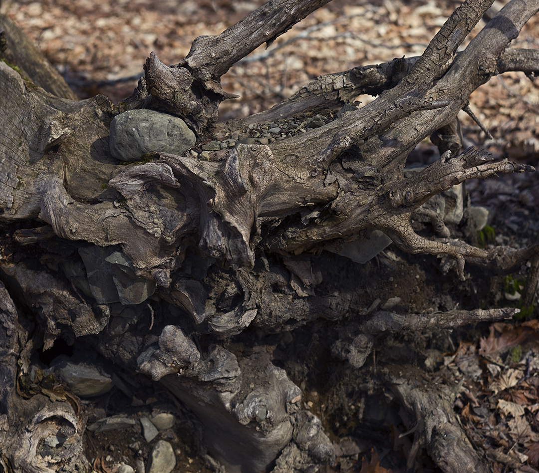 Roots and Rocks - 3 +.jpg