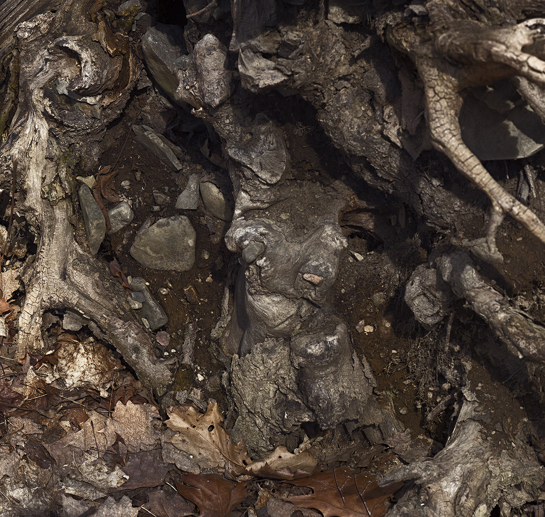 Roots and Rocks - 1 - Detail +.jpg