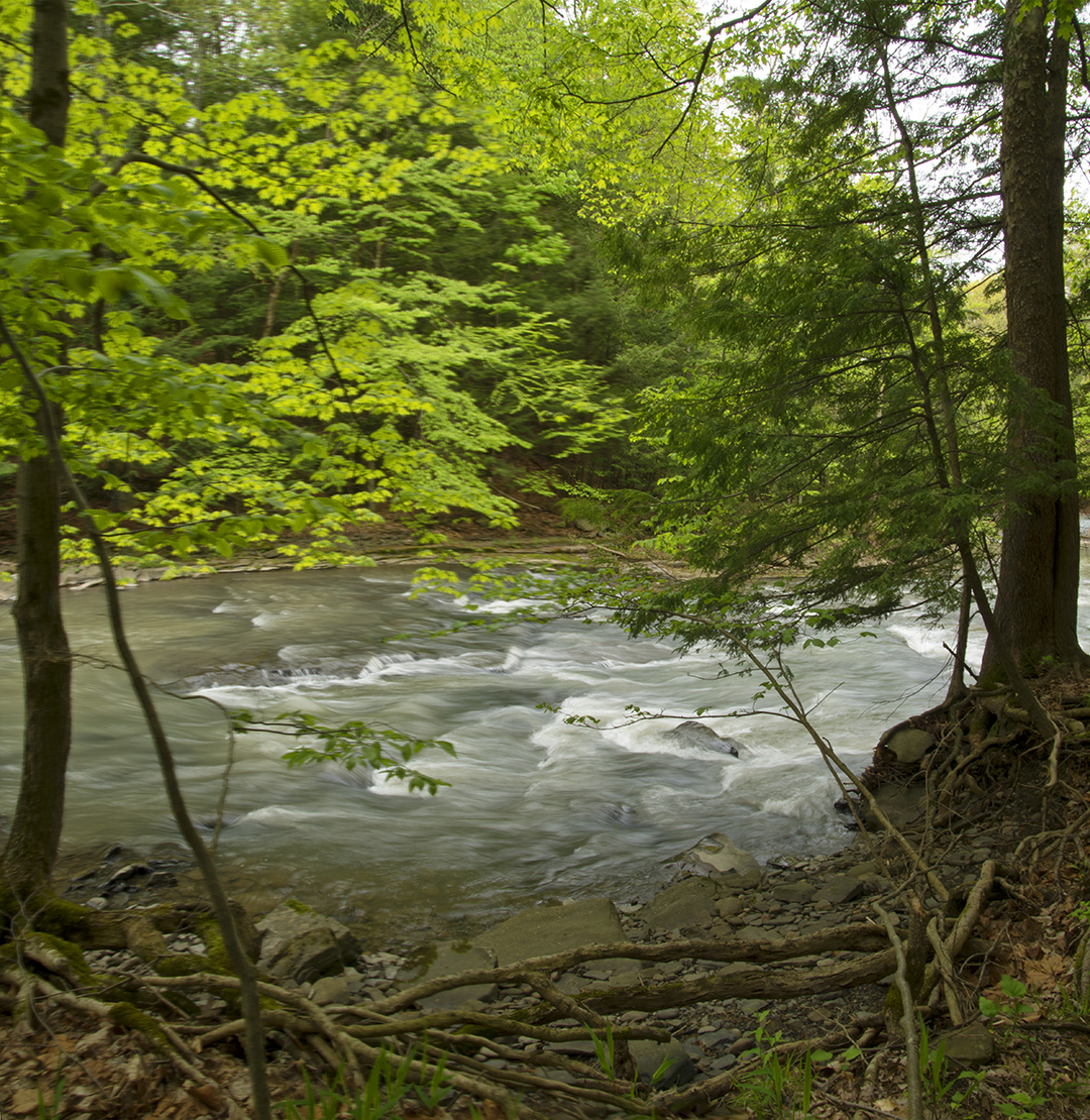 The Creek Itself - 1.jpg