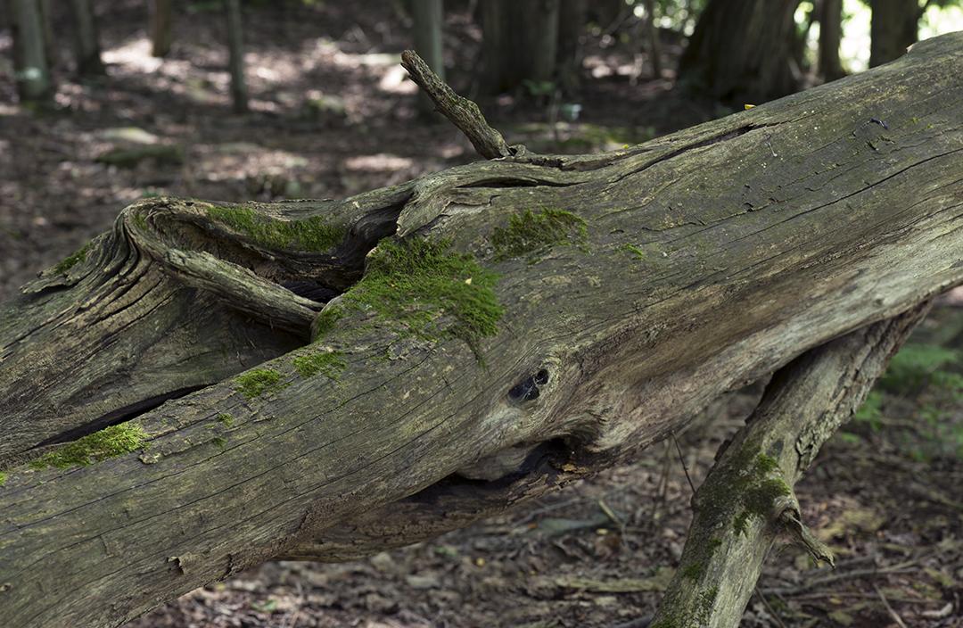 Moss on Old Log +.jpg