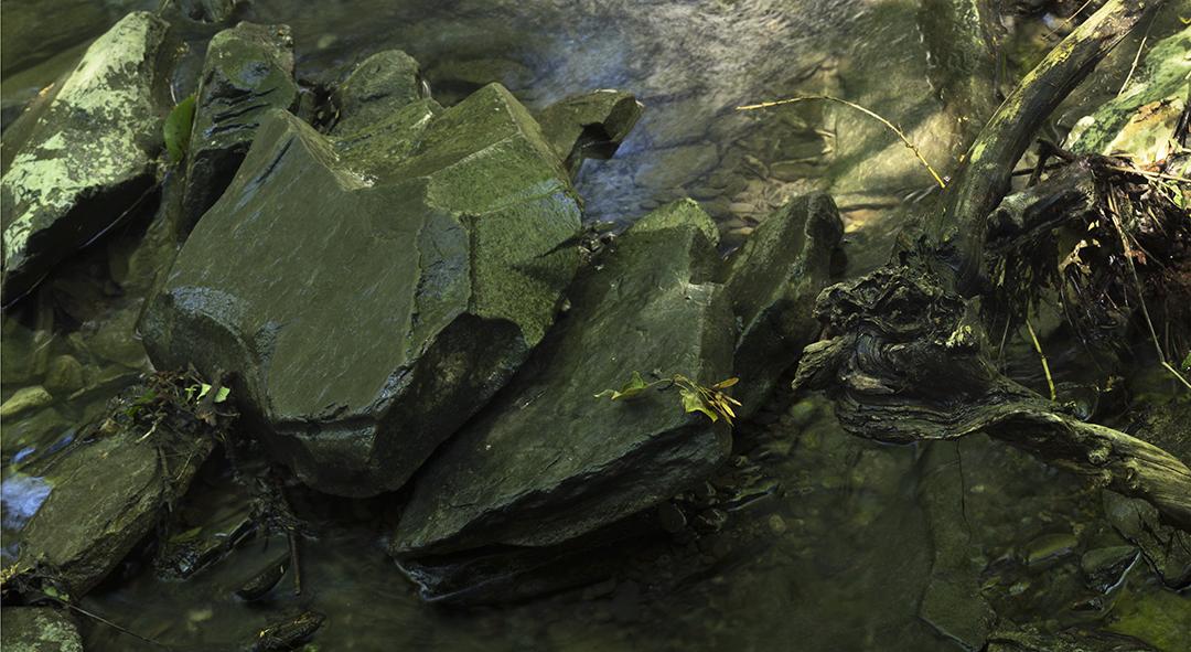 Creek Joker - 1 +.jpg
