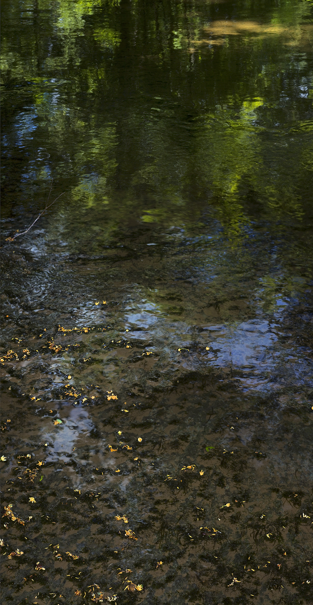 Green Creek - 2 (2) +.jpg