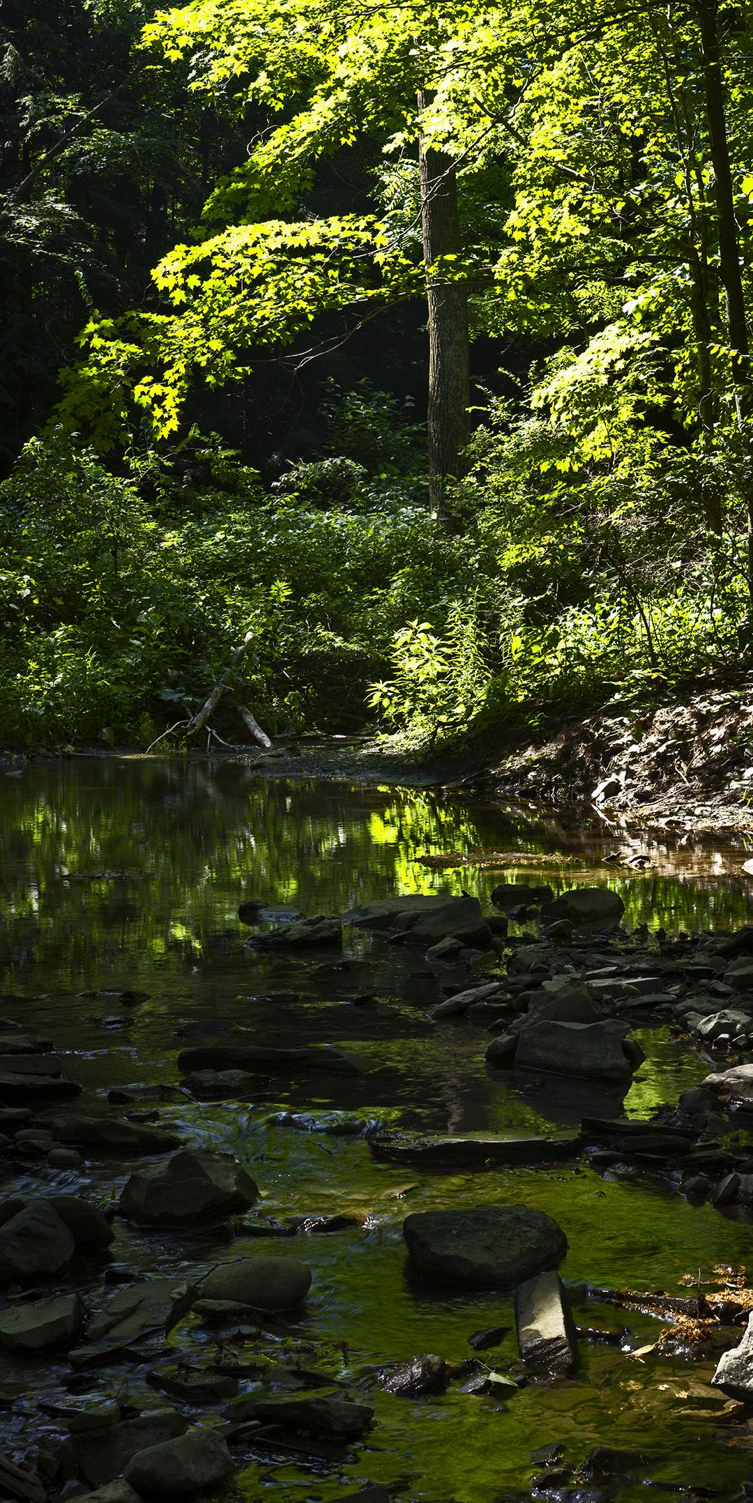 Green Creek - 1 +.jpg