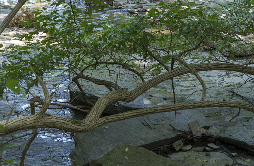 Creek Geometry.jpg