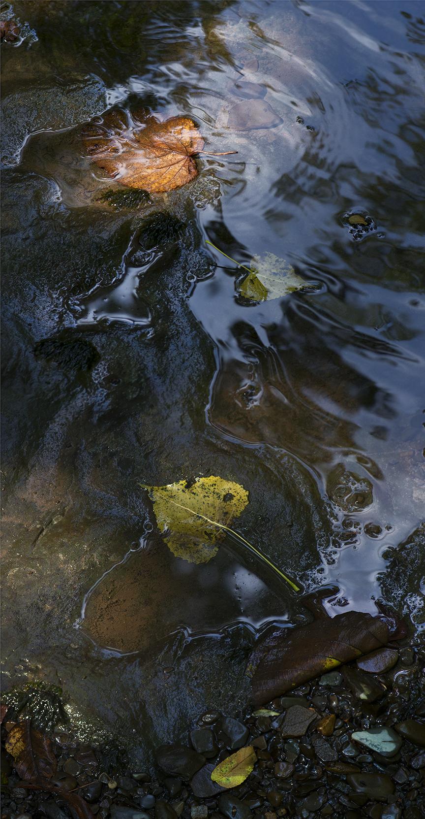 Enlightened Leaves - 1 +.jpg