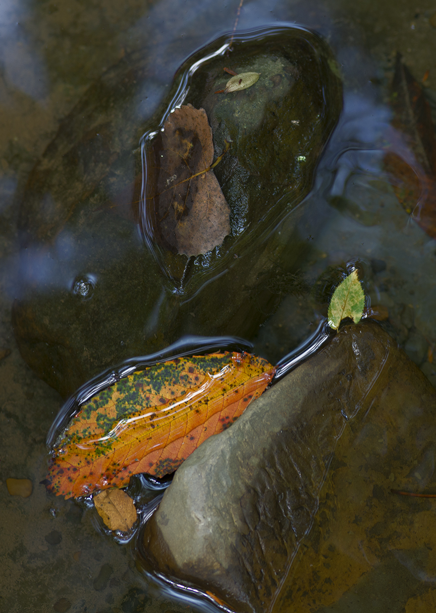 Rock and Leaves - 1 - Detail.jpg