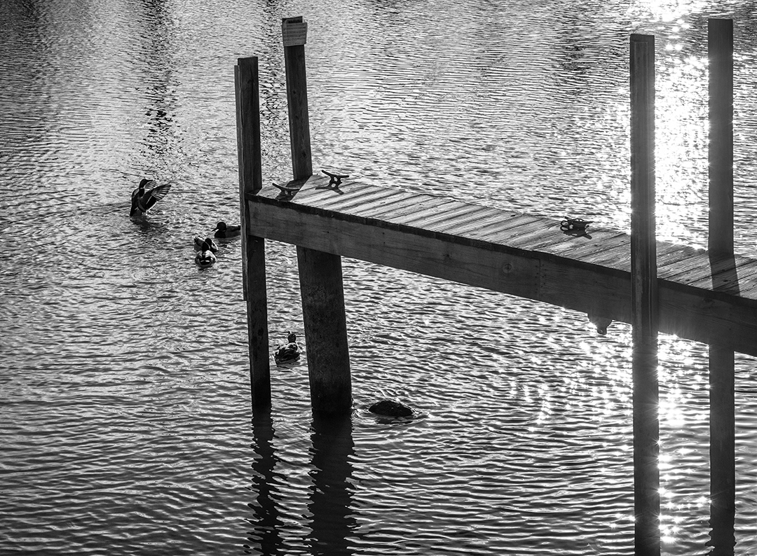 Morning Ducks - 1 - BandW.jpg