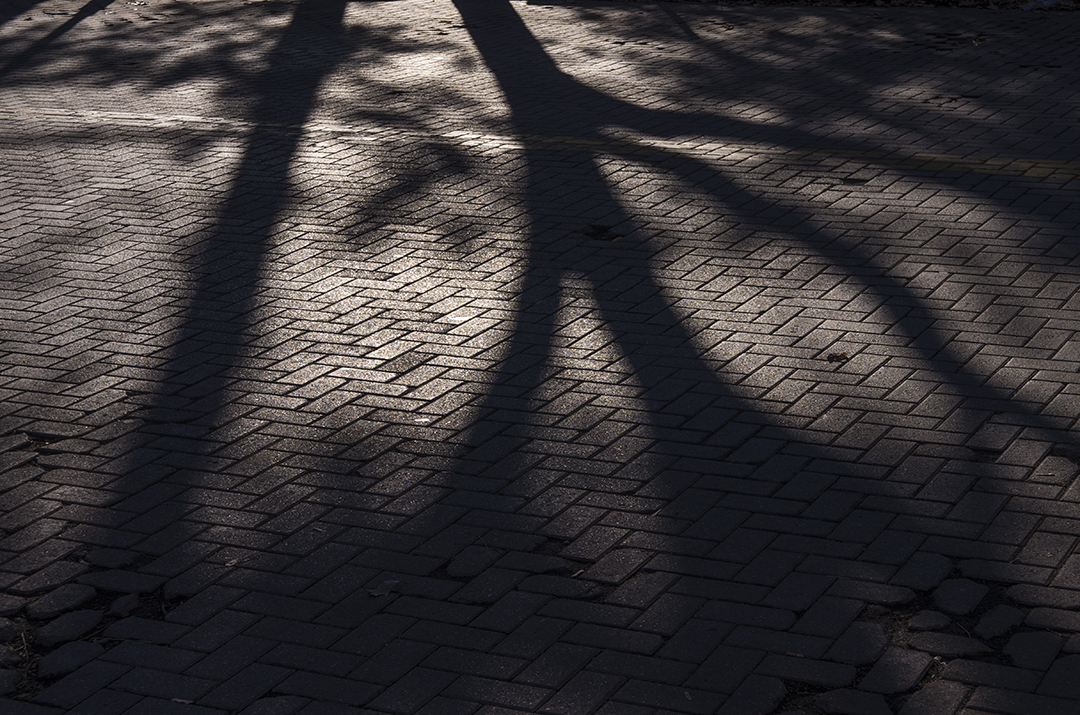 Shadows on the Cobblestones.jpg