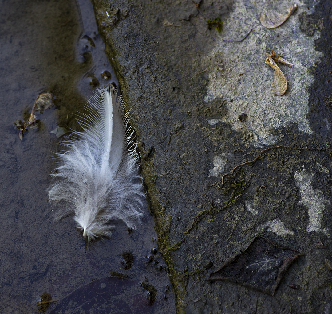 The Feather - 1.jpg