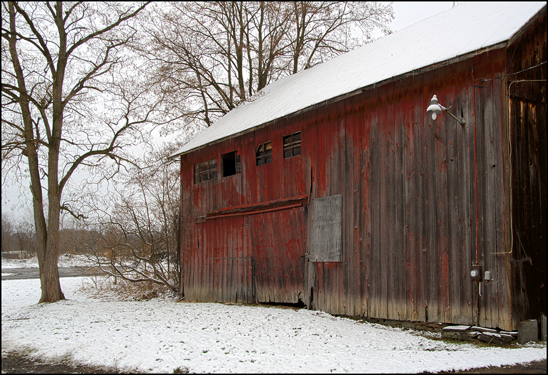 Red in Winter