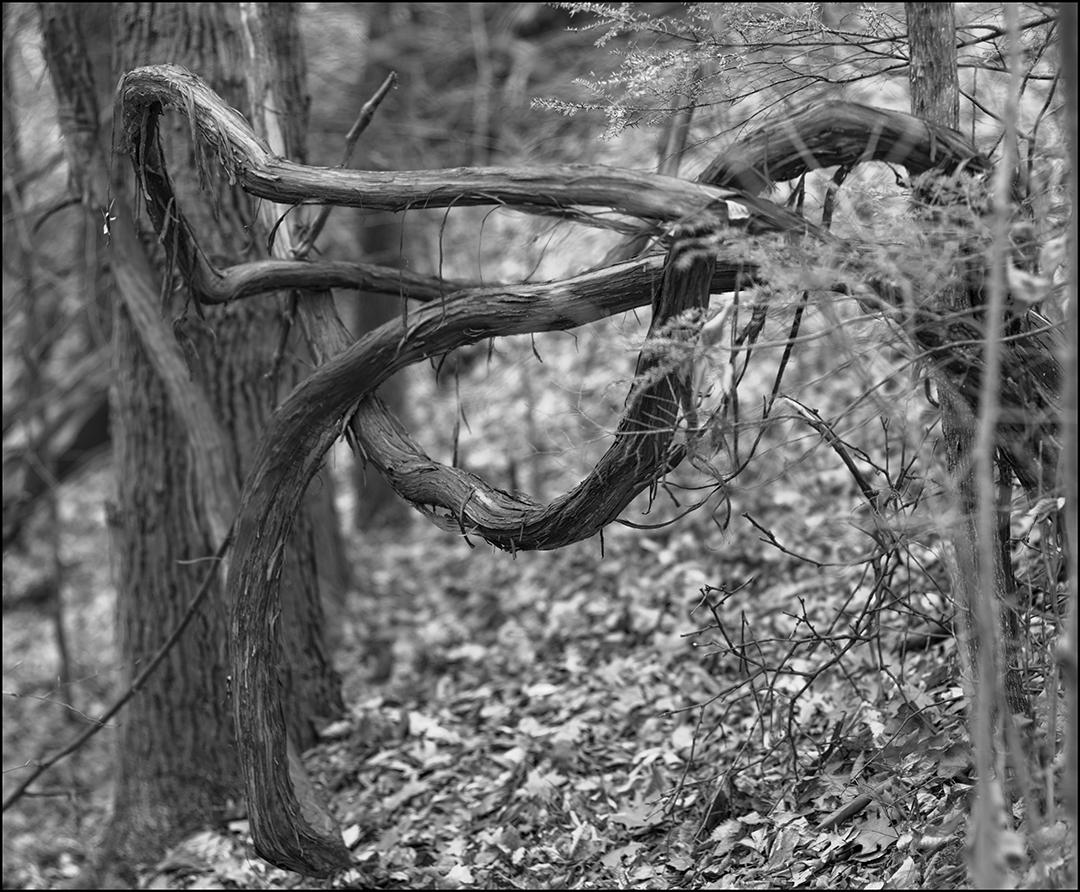 Tied-Up - 1 - B&W.jpg