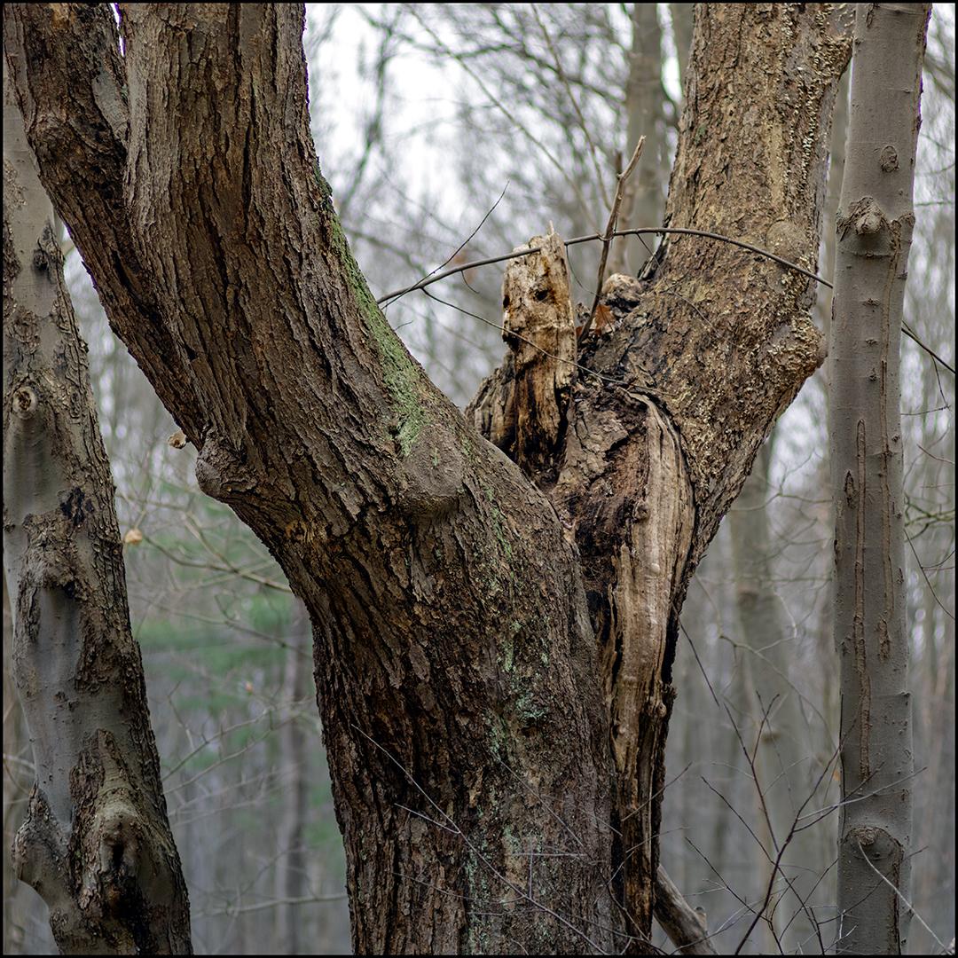 Tree Woman +.jpg