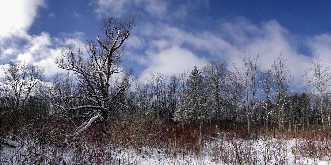 Deer Land - 4 +.jpg