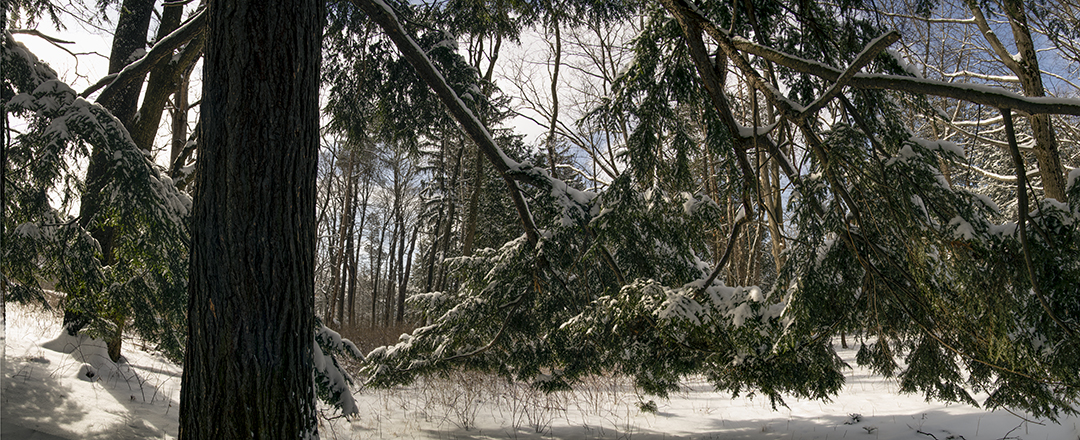 Loaded Branches - 2.jpg