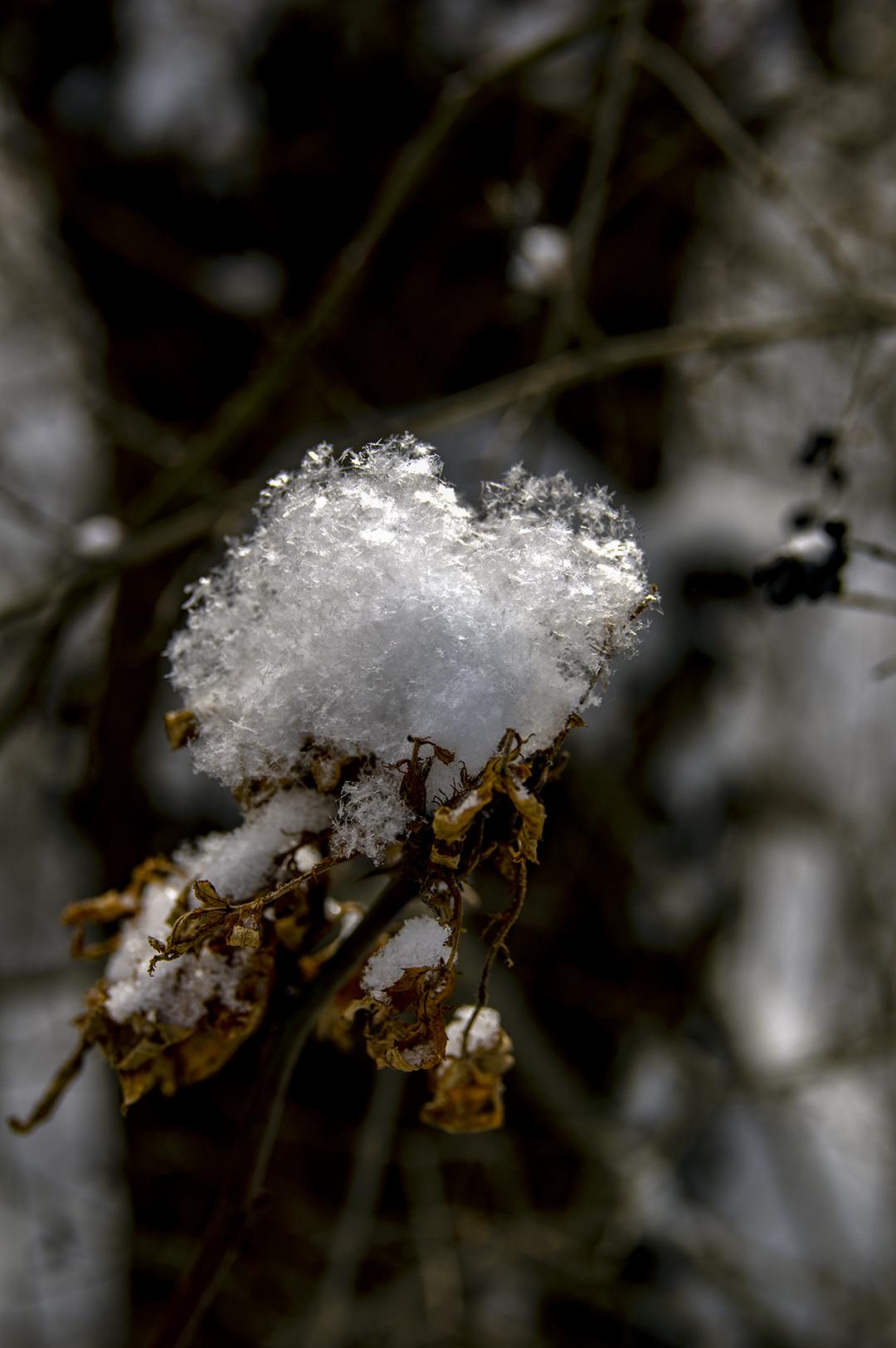SOftest Snow - 1.jpg