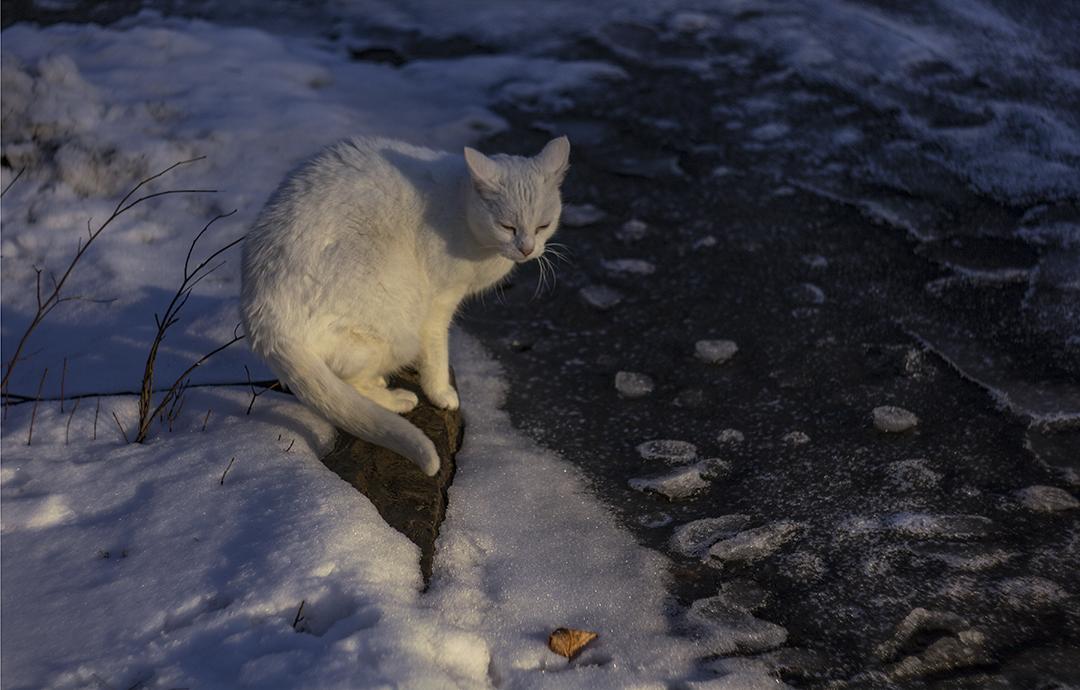 Bates, the Cat - 3.jpg