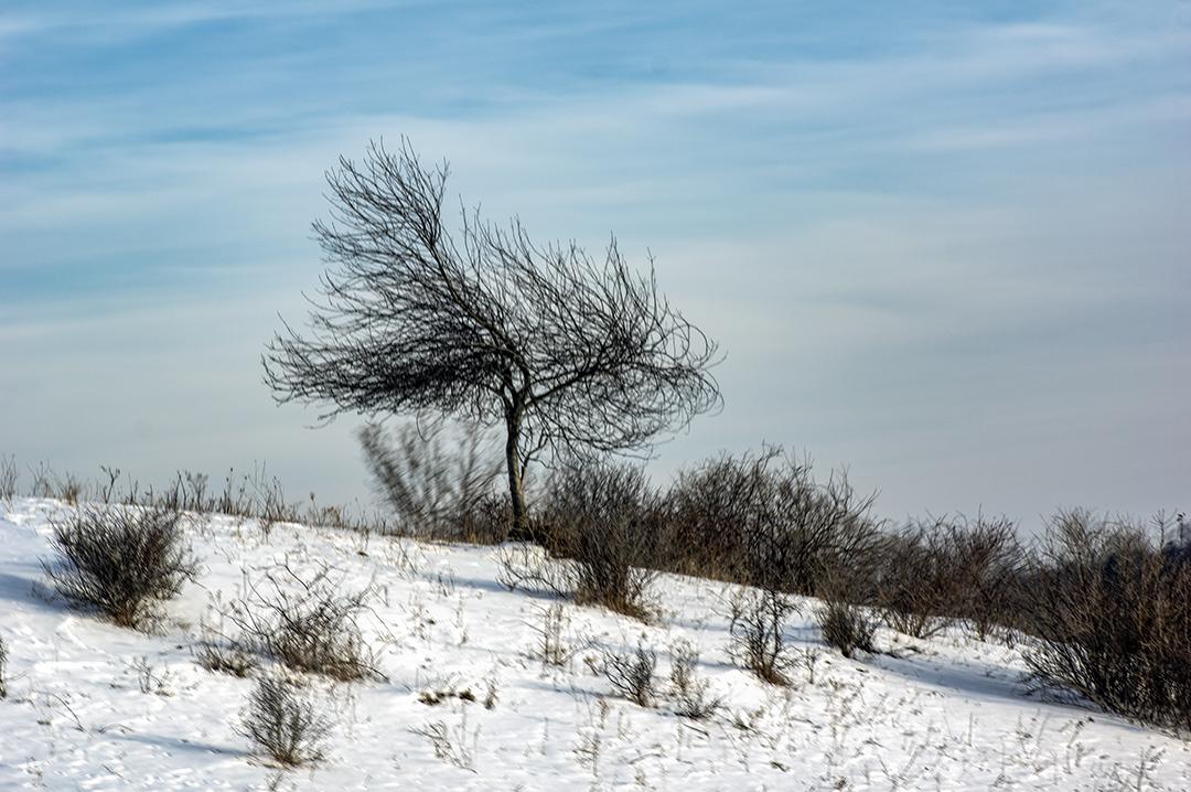 Inclined Tree - 2 +.jpg