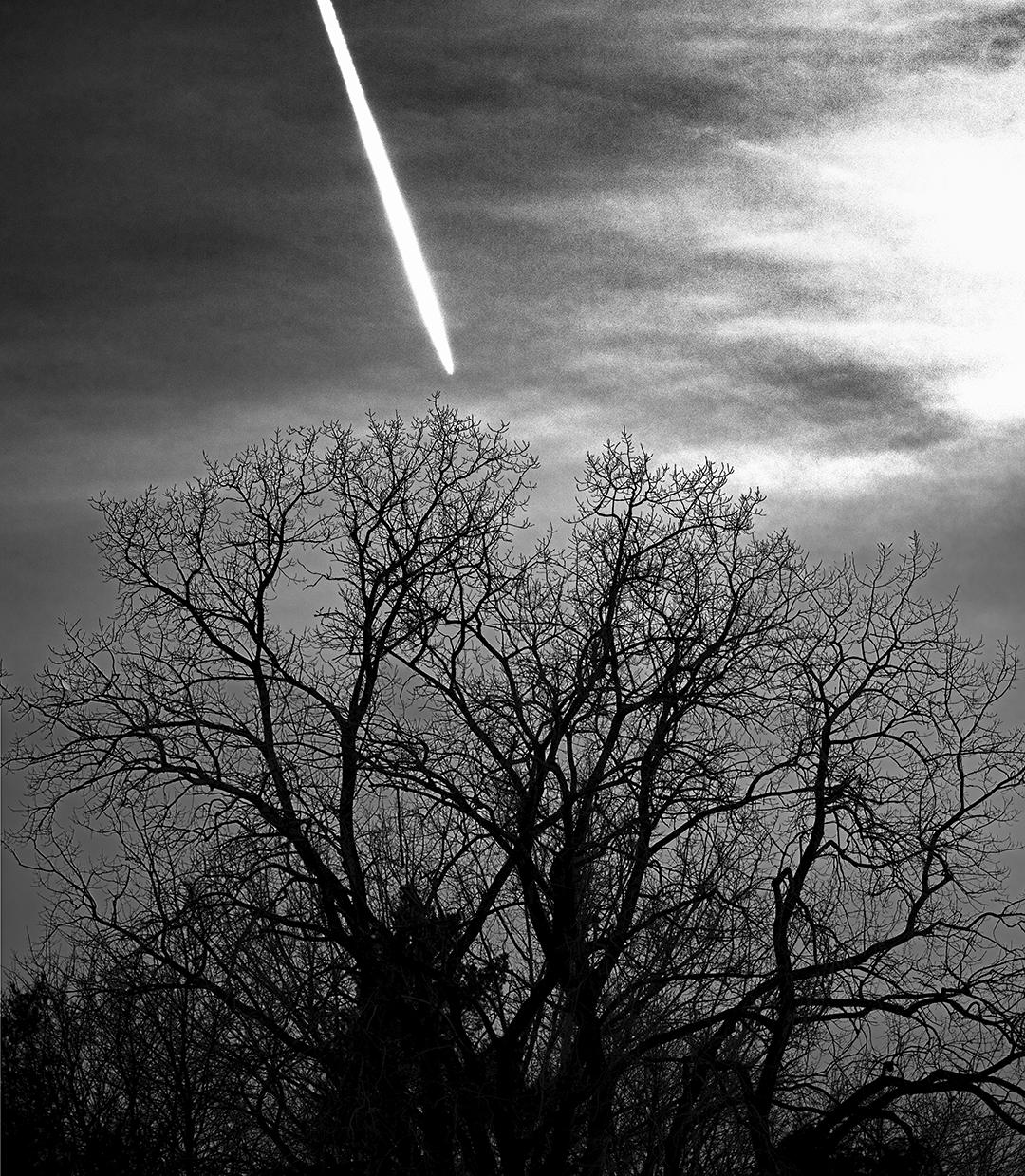 Plan and Tree + B&W.jpg
