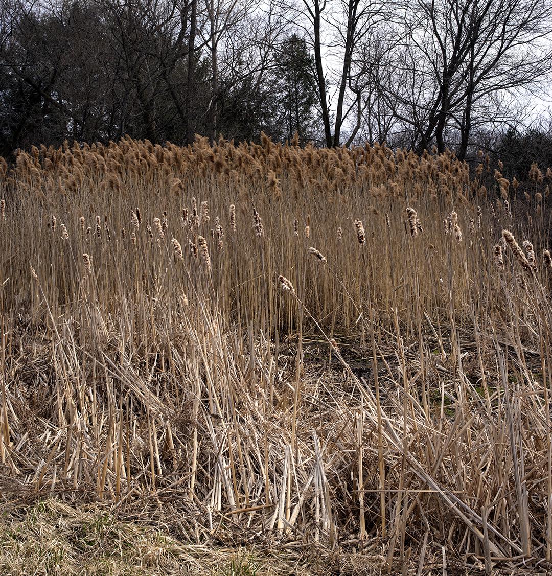 Tall Grasses - 6 +.jpg