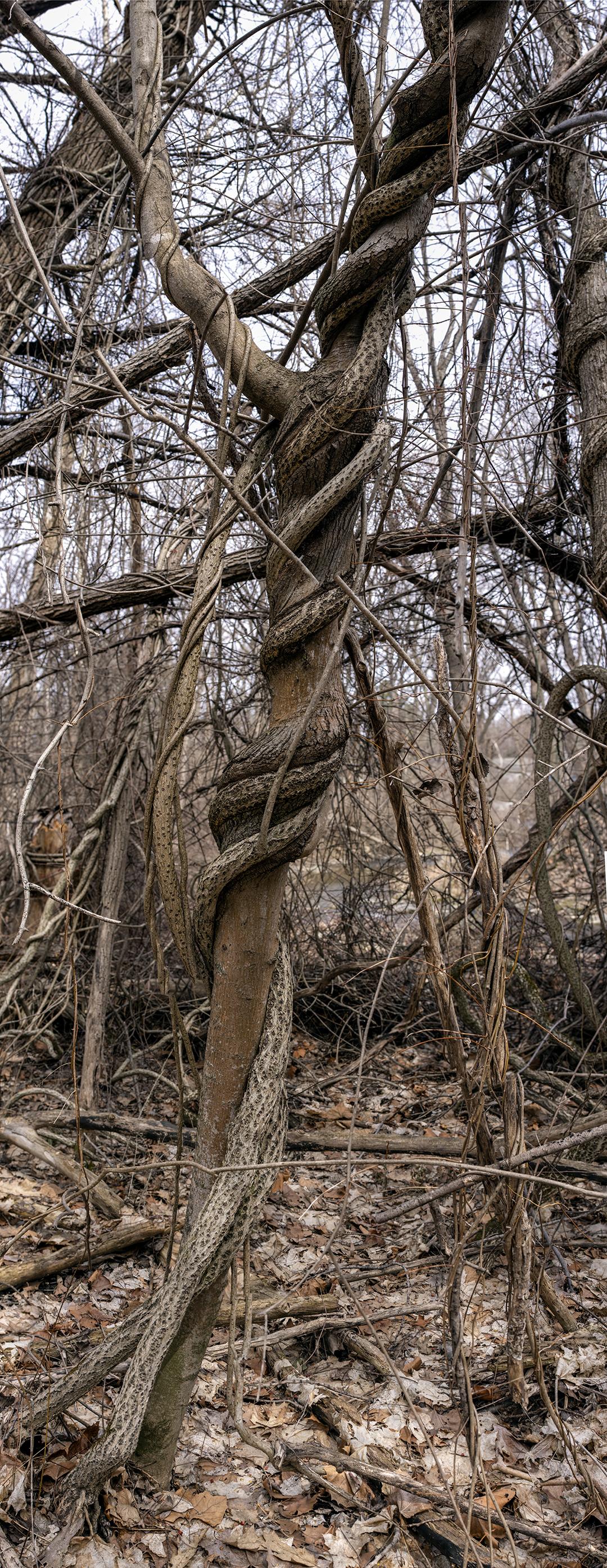 Natural Knots - 14 +.jpg