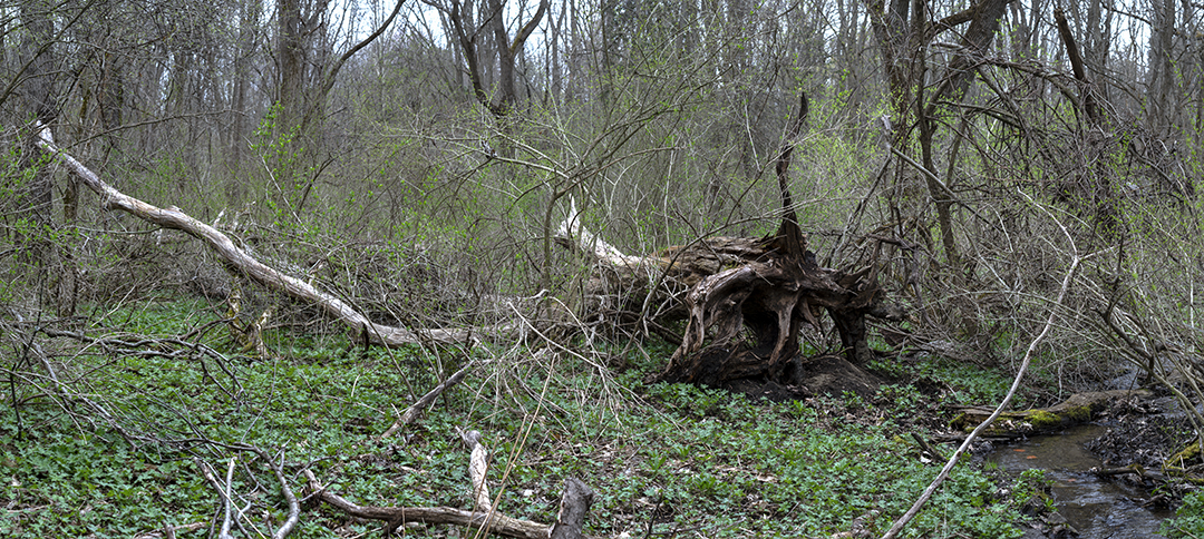Old Root System - 1.jpg