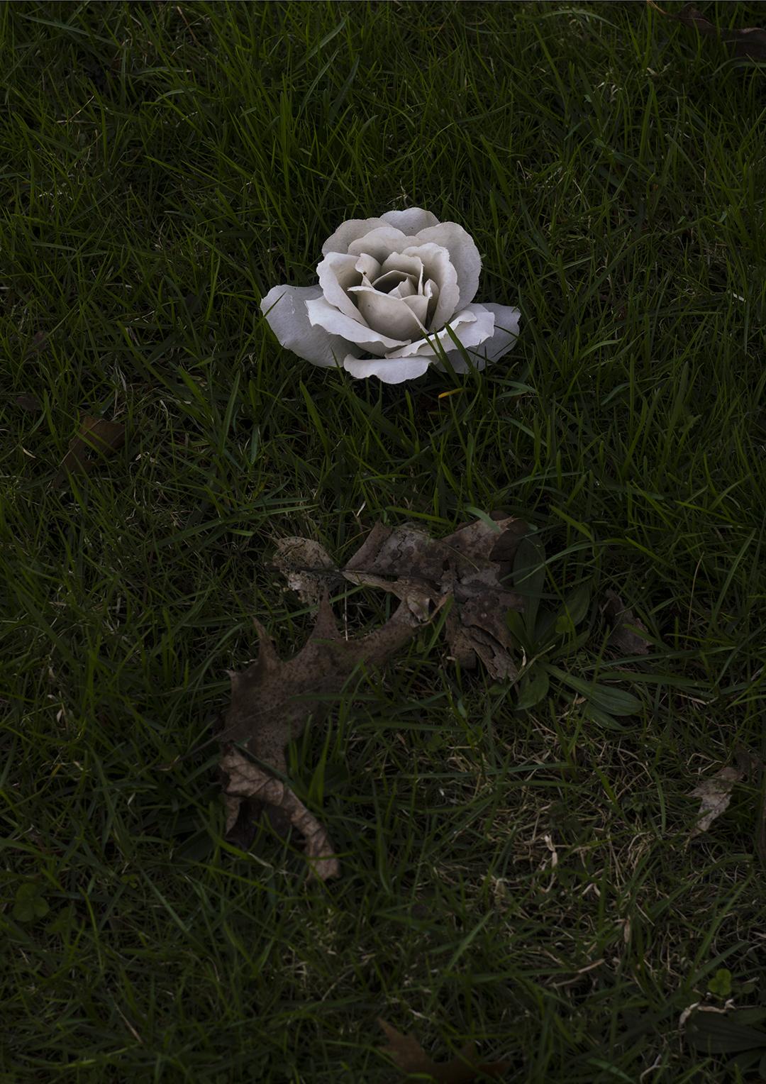 White Rose +.jpg