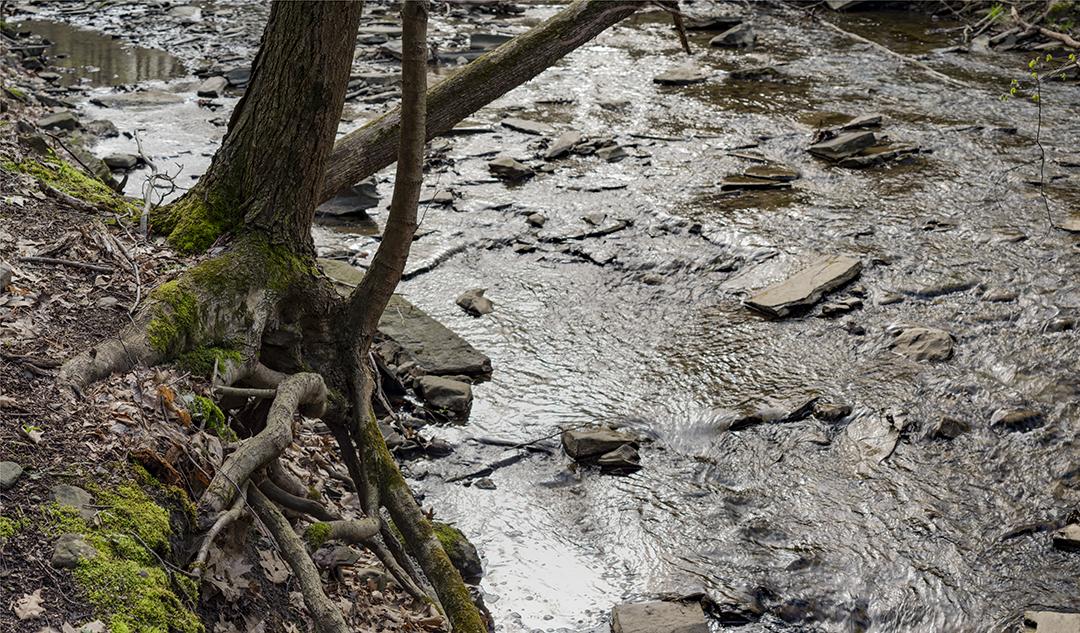 Tree Moss - 1.jpg