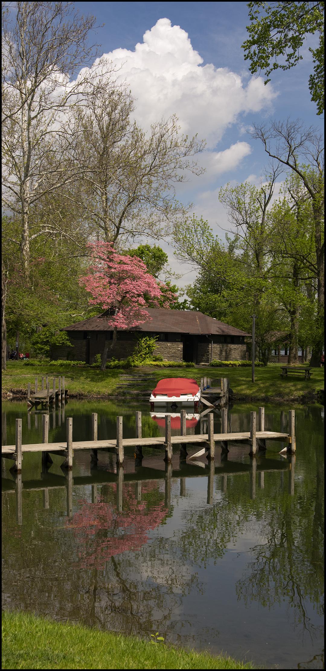 Pink Spring - 2.jpg