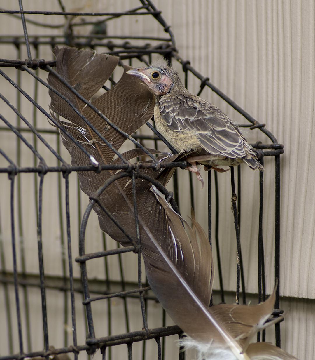 Baby Wren After First Flight - 7 B + Detail.jpg