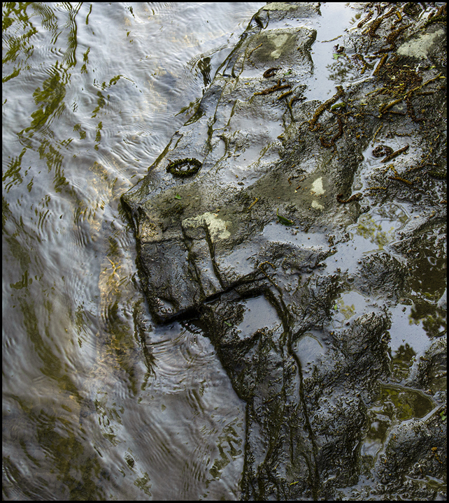 Photograph made at Taughannock Creek by F. L.
