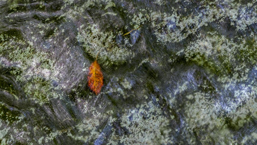 Red Leaf - 2 +.jpg