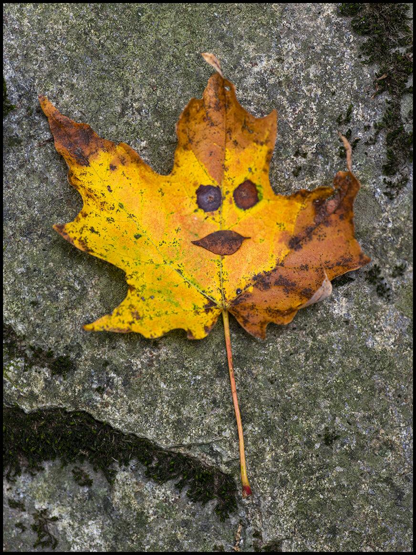 Creek Character -Milady Leaf - 1.jpg