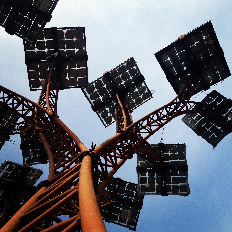 Solar Tree branch (Jake).jpg