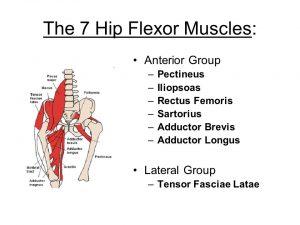 hip-flexor-muscles-300x225.jpg