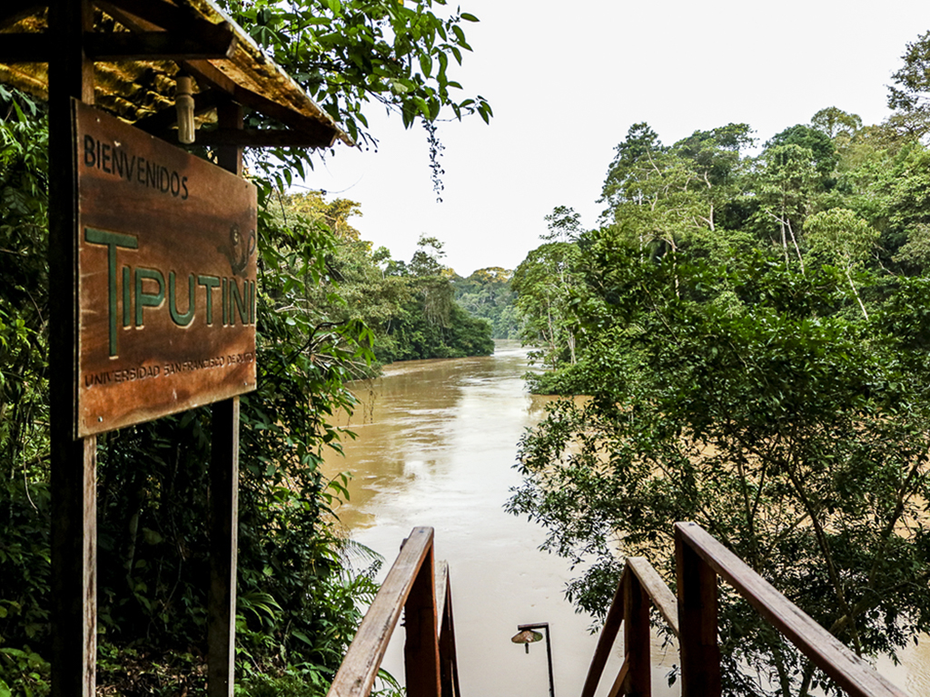 The view of the Tiputini River from the landing site at the entrance to the research station. Yasuni National Park lies across the river.    (Maria silva)