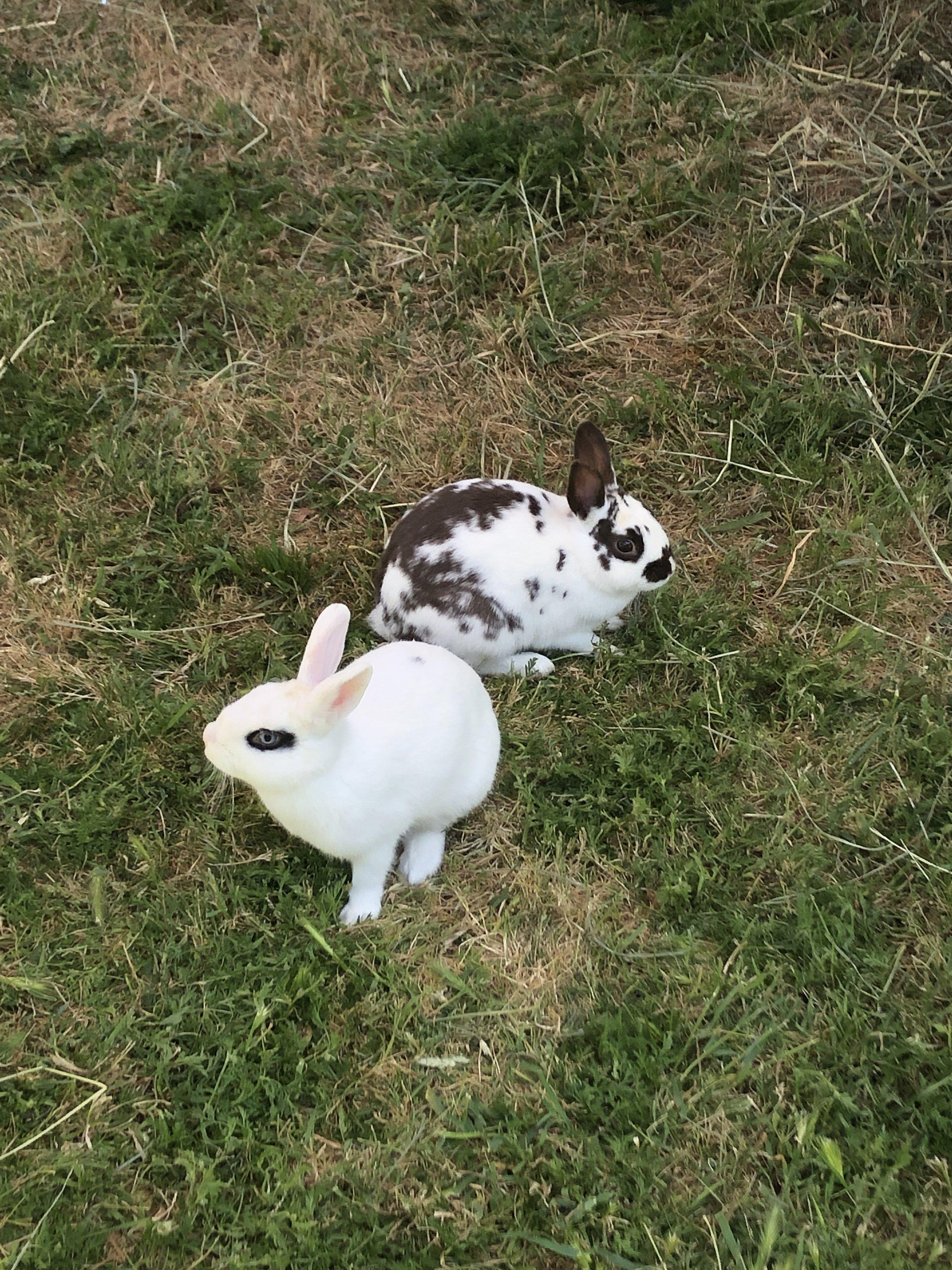 Rabbits of varied patterns visited horner