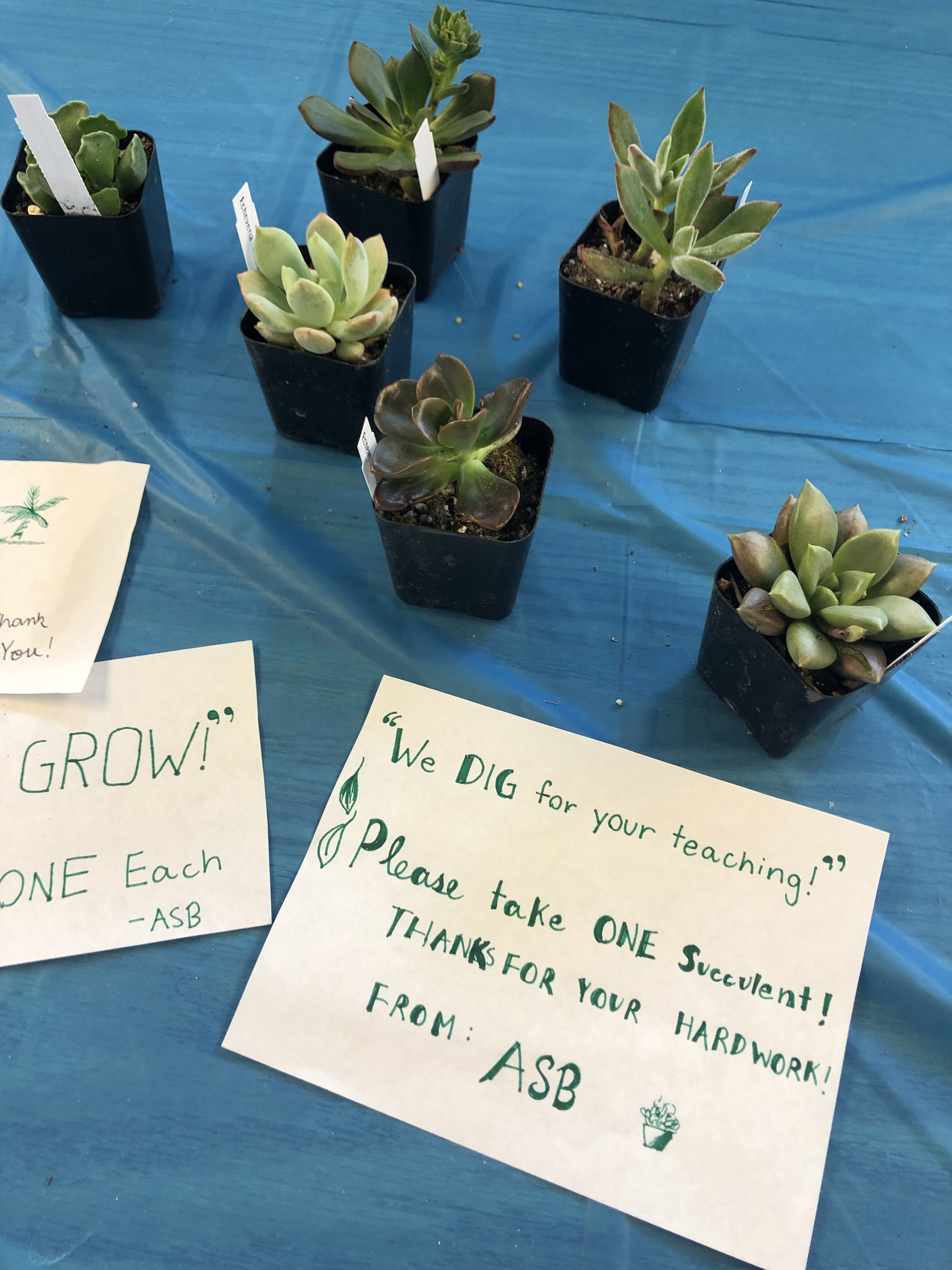 Leadership Students gave teachers plants